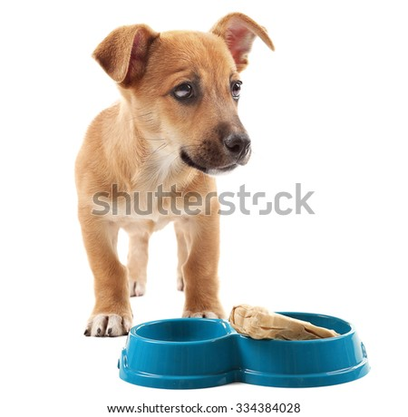 Funny puppy eating from bowl isolated on white - stock photo