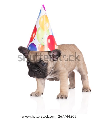 funny puppy in a birthday hat