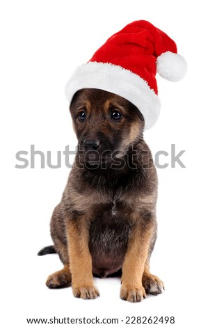 Funny puppy in Santa Claus hat isolated on white
