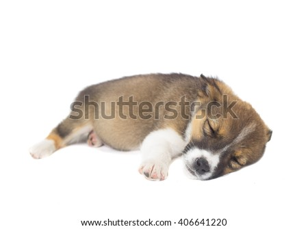 funny puppy sleeping on a white background