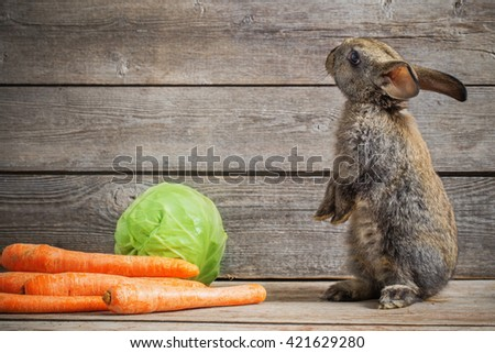 funny rabbit with vegetables on wooden background - stock photo