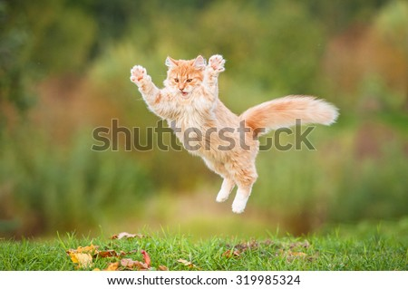 Funny red cat flying in the air in autumn - stock photo