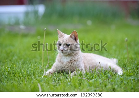 Funny red hair cat on the green grass - stock photo