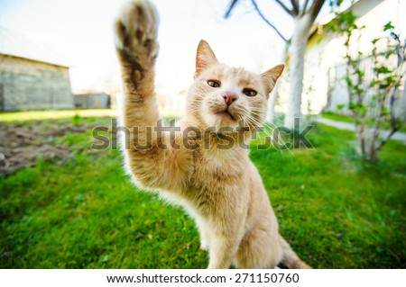 Funny red-haired cat doing selfie - stock photo
