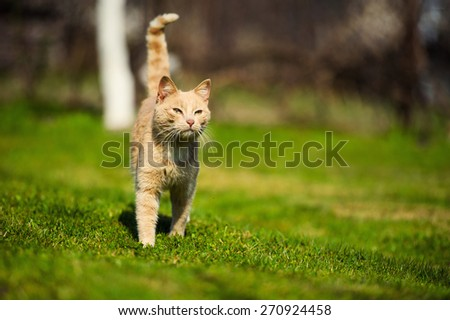 Funny red-haired cat on green grass - stock photo