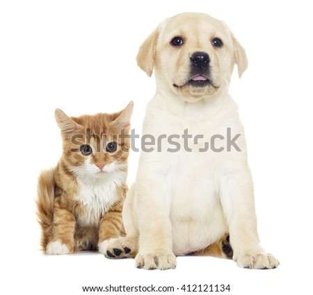 Funny red kitten and puppy
