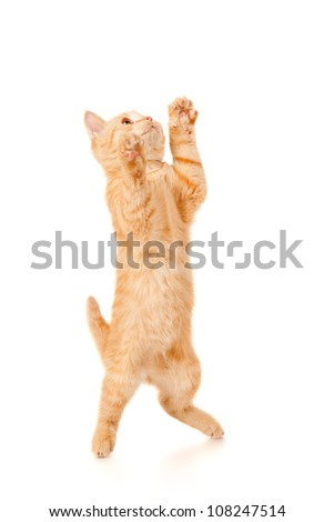 Funny redhead cat jumps up, isolated on white