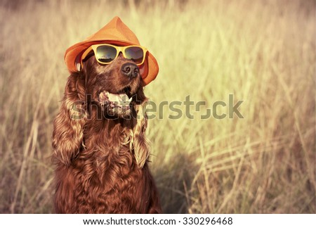 Funny retro dog wearing sunglasses and hat - stock photo