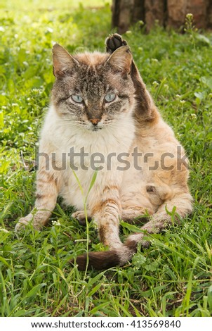 Funny siamese cat say goodbye with paw - stock photo