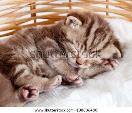 funny sleeping baby cat kitten in wicker basket - stock photo