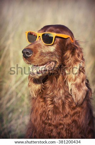 Funny smiling dog with sunglasses - stock photo