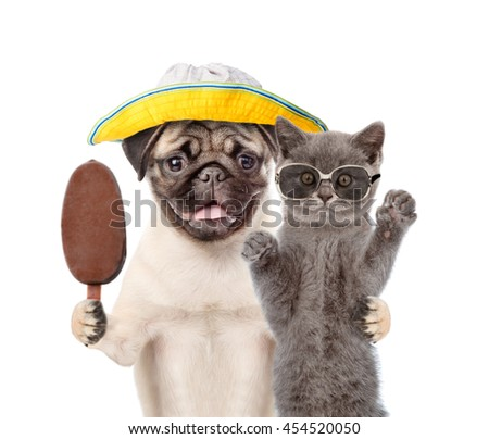 Funny summer cat in sunglasses and dog holding ice cream. isolated on white background