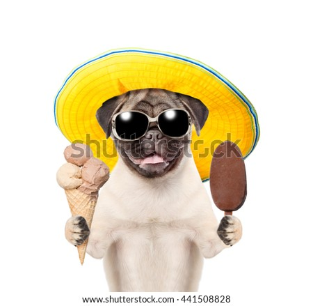 Funny summer dog  in sunglasses and hat holding ice cream. isolated on white background