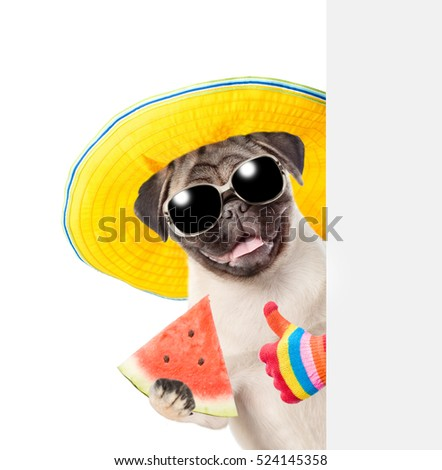 Funny summer dog with sunglasses holding watermelon peeking from behind empty board and showing thumbs up.