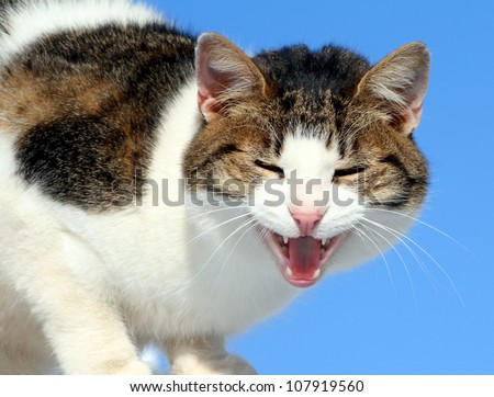 funny sweet french girl - the girlfriend of my cat - stock photo