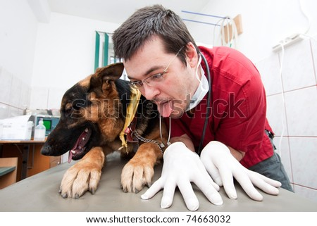 Funny vet imitating his german shepherd patient - stock photo