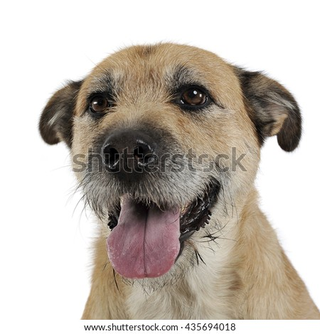 Funny wired hair mixed breed dog in studio
