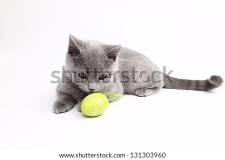 Funny young cat playing with colored Easter eggs on Holiday - stock photo