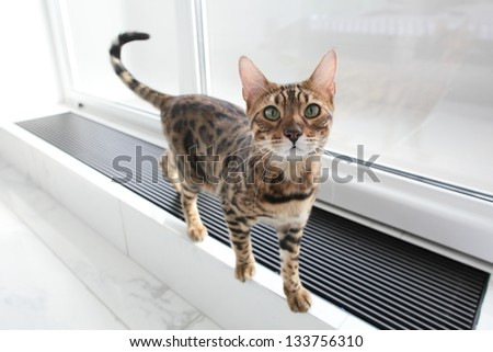 funny young cat with green eyes in white room