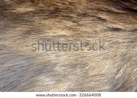 Fur closeup photo - stock photo
