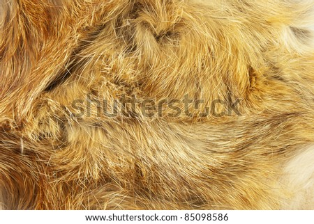 Fur of a fox as a background - stock photo