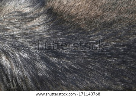 Fur of wolf background. - stock photo