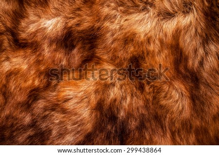 Fur, Red Brown Shade. Wolf Fox Skin. Natural Mountain Wildlife Animal. Concept and Style for Background, Texture and Wallpaper, Close up Full frame. - stock photo