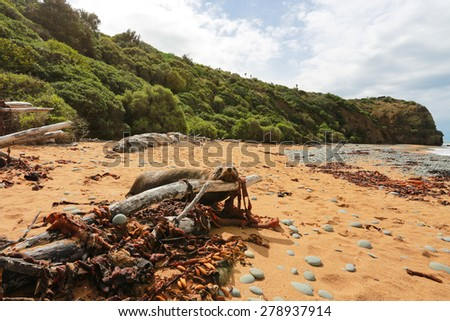 Fur Seal (Kekeno) on the beach, Oamaru, New Zealand - stock photo