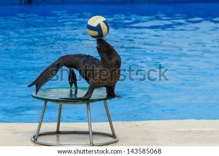 Fur seal with ball - stock photo