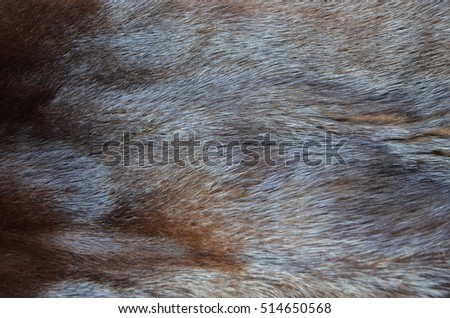 fur, skin, mink, goat, mink, mink coat, pile, dark fur, hair, feathers, warm, winter, Russian fur texture, texture of fur, brown, black, shiny, smooth, rich, luxurious, new