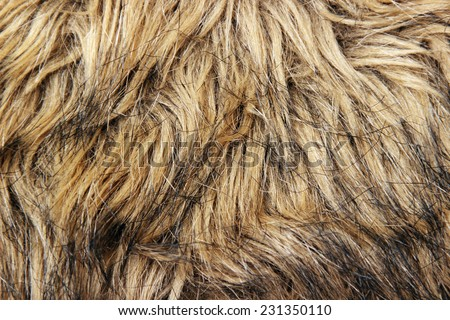 Fur texture - stock photo