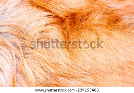 Fur texture.  - stock photo
