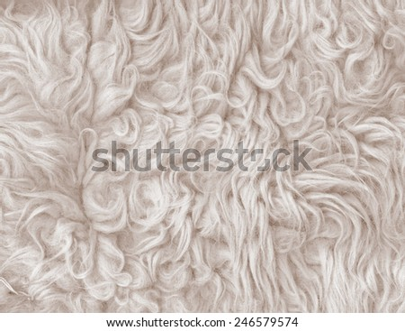 Fur texture. Abstract backgrounds. Beige color carpet