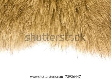 fur texture background - stock photo