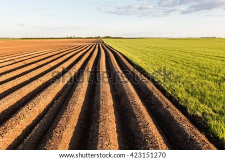 Furrows row pattern in a plowed field prepared for planting crops in spring. Growing wheat crop in springtime. Horizontal view in perspective with cloud and blue sky background. - stock photo