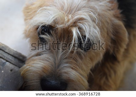 Furry dog watching up - stock photo