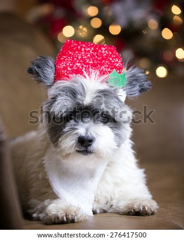 Furry dog with Santa hat and beard - stock photo