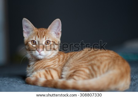 Furry Tabby kitten lying with his head up and alert - stock photo