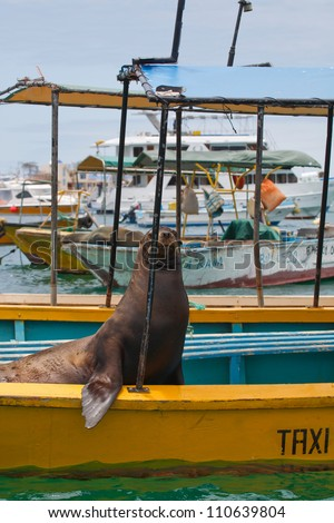 Galapagos sea lion resting on a taxi boat - stock photo