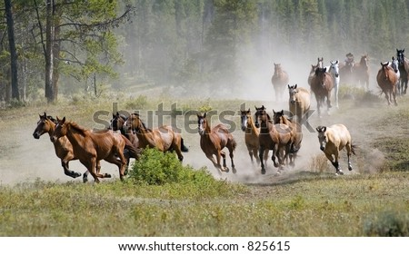 stock-photo-galloping-horse-herd-825615.