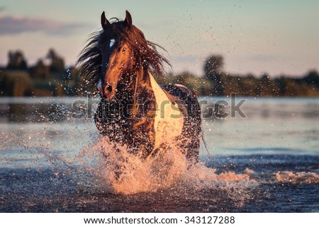 Galloping horse on the water - stock photo