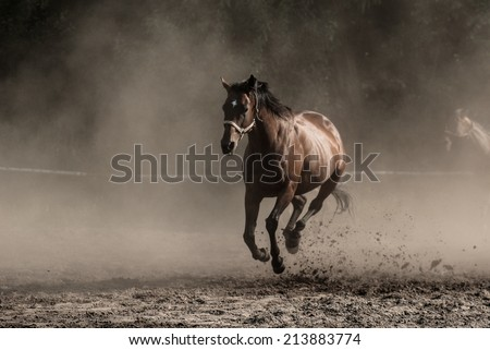 Galloping noble brown horse among the clouds of dust  - stock photo