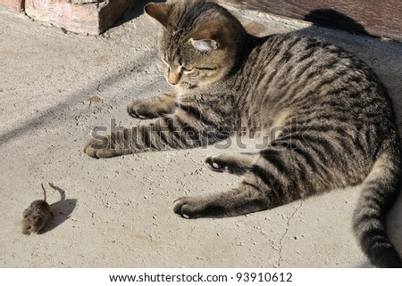 Game of cat and mouse - stock photo