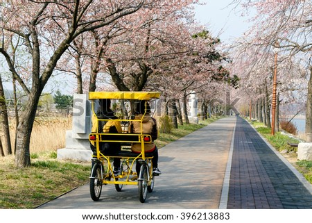 Gangneung Gangwon South Korea. April 2015. Couple cycling through the cherry blossoms are in bloom trails.
