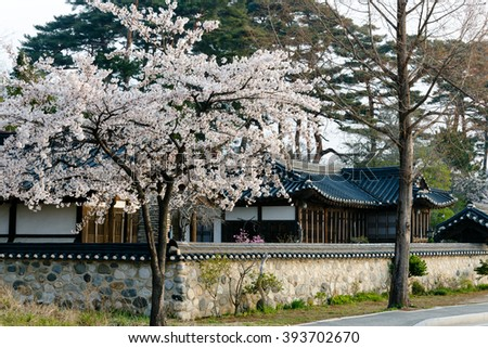 Gangneung Gangwon South Korea. April 2015. Gyeongpoho Lake. Cherry blossoms bloom in (traditional) Korean-style house (hanok)