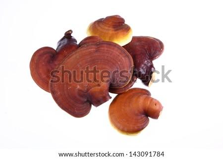 Ganoderma Lucidum isolated on white background - stock photo