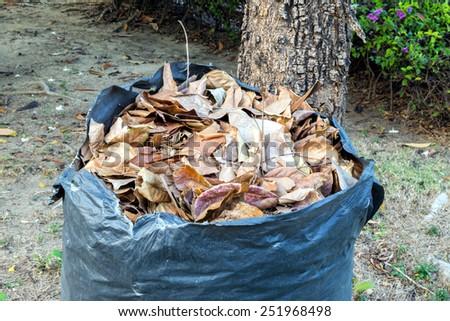 Garbage bag full of leaves - stock photo