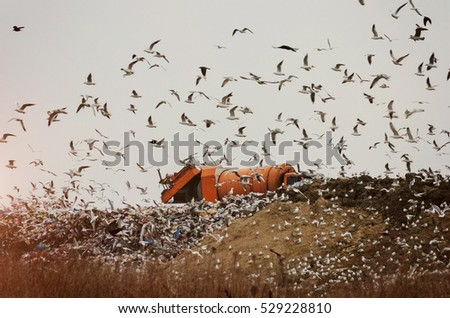 Garbage truck on a landfill with seagulls