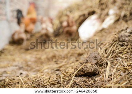 Garbage with rooster behind. - stock photo