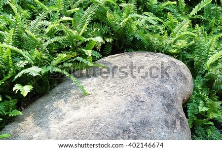 Garden and Plant, Brown Stone in The Garden Decorate with Green Ferns.